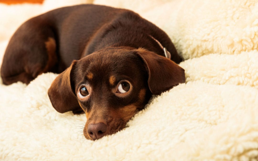 TPLO Recovery Tips for Pet Owners
