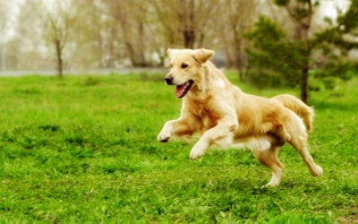 How to Keep Your Dog Feeling Young