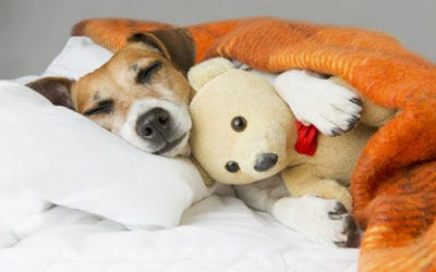 Preparing for Your Dog's TPLO Surgery