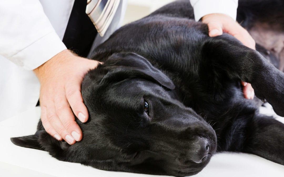 seizures in older dogs - 1080×675
