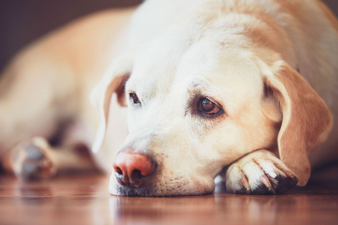 What-to-Expect-After-Your-Dog's-TPLO-Surgery
